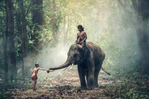 elephant 1822481 1920