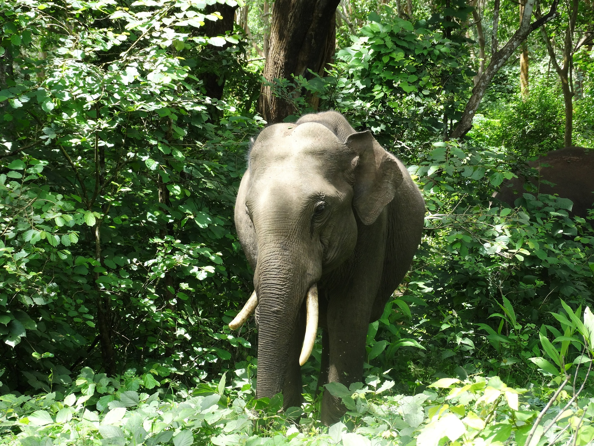 indian elephant 393694 1920