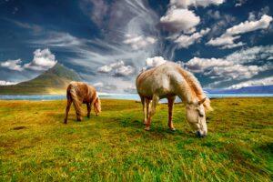 horses 2427513 1920